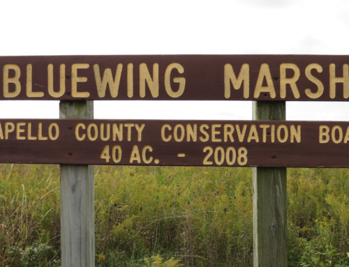 Bluewing Marsh Sign